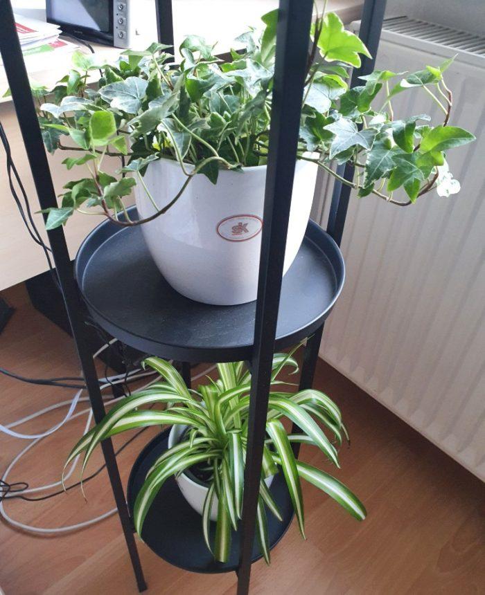 New plants in my livingroom