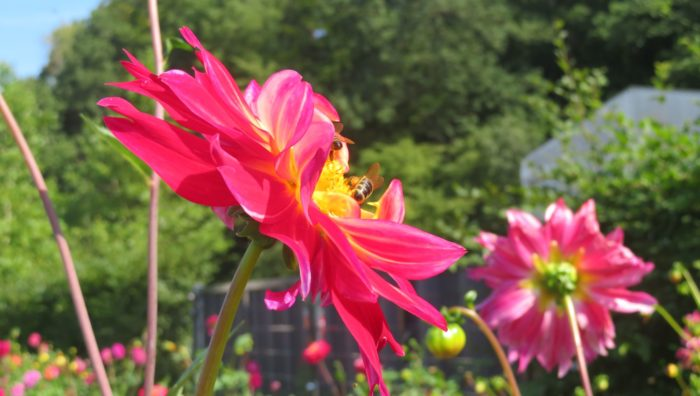 Flowers and bees, Sauerland Park, 2021
